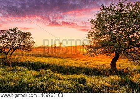 Sunrise Or Sunset In A Spring Field With Green Grass, Lupine Sprouts Trees On A Foreground And Cloud