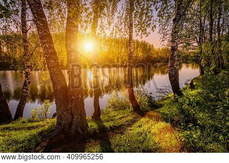 Sunrise On A Pond With Young Green Reeds, Birches Reflected In Water And Fog.