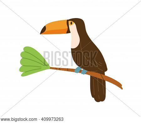 Profile Of Cute Toucan Or Tucan Sitting On Tree Branch. Funny Tropical Bird With Long Yellow Beak. E