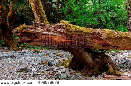 Stony Log - A Riverside Log Formation Along The Blue River - Northeast Of Blue River, Or