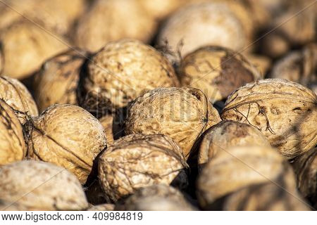 Walnuts Closu-up With Shallow Depth Of Field. Background Of Healthy And Fresh Walnuts. Unpeeled Waln