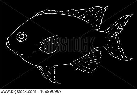 Sketch Chromic Fish Sketch For Decoration Design. Isolated Vector Illustration. Vector Sketch Illust