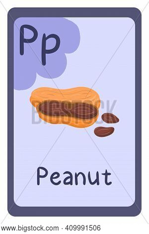 Colorful Abc Education Flash Card, Letter P - Peanut, Seed With Shell. Alphabet Vector Illustration