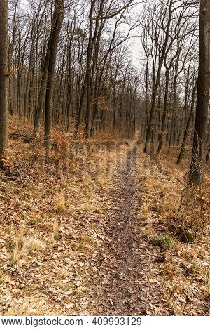 Forest Paths Lined With Oak Trees In Czech Republic. Cloudy Day In The Woods. Muddy Trail.