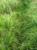 Narrow footpath in green grass across the meadow poster