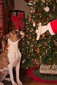 Santa Clause giving a dog a bone for Christmas poster