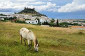 A medieval castle dominates on the hill above the Spanish white town Almodovar del Rio. In the foreground a horse is grazing in the spring pasture. poster