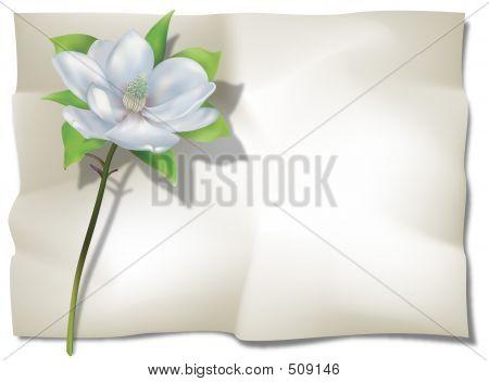 Magnolia On Sheet
