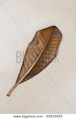 Dry Frangipani Leaf On Mable Stone Texture