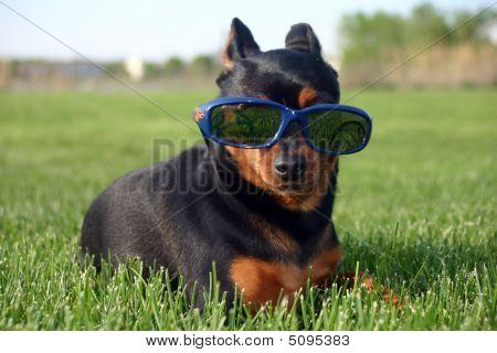 Dog Relaxing In Sun