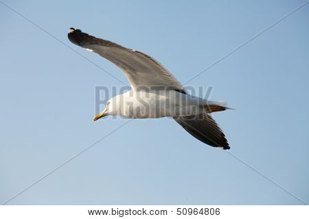 The image of fliing seagulls
