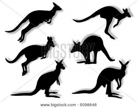 Kangaroos In Silhouettes