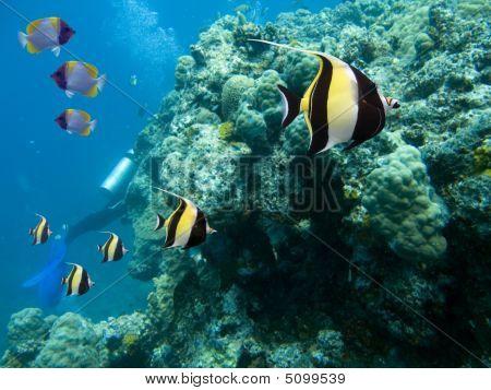 Idol reef