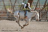 Cowboy riding bucking horse in rodeo competition. poster