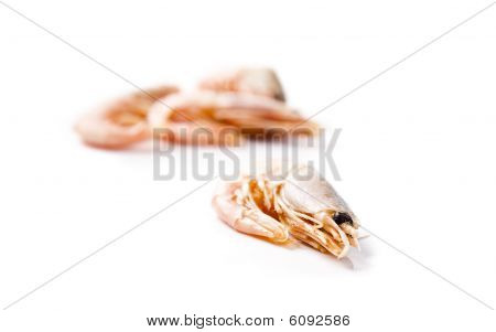Four shrimps laying on a white background. Shallow focus poster