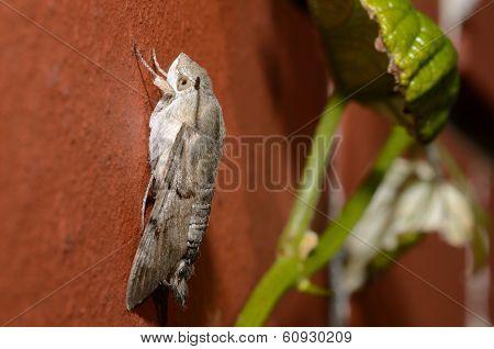 Butterfly On Wall Side