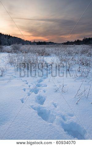 Footprints In Landscape