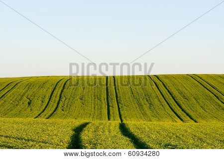 View To Field In Summertime