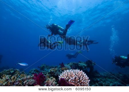 Divers Above A Colorful Tropical Reef