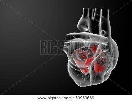 Heart atrium