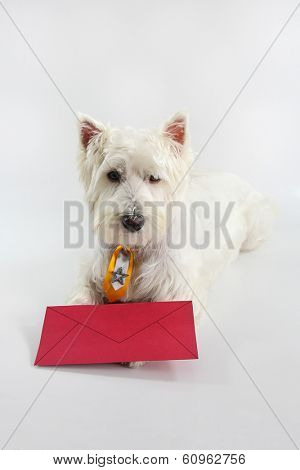 You have dog mail -