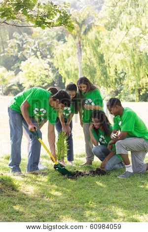 Group of multiethnic environmentalists gardening in park