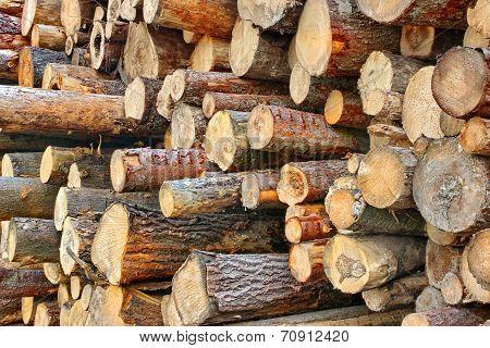 Wood Harvesting Background