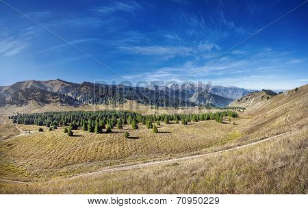 Panorama of Kok Zhailyau mountain valley with fir forest at blue sky in Almaty Kazakhstan poster