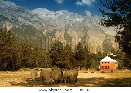 Prokletije mountains, view from Thethi village, Albania, the Balkans poster