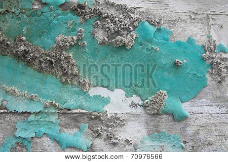 Old Wooden Maritime Background With Fossils In Green.