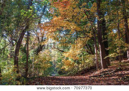 Beautiful Autumn forest in Rock Creek Park, Washington DC - United States