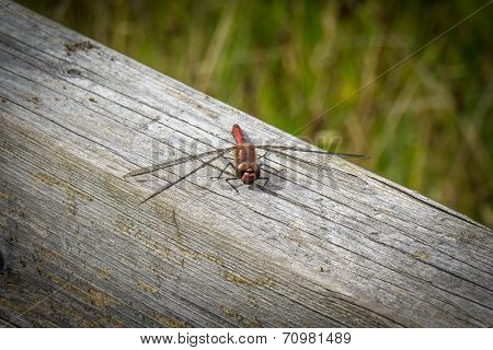 Dragonfly On Wooden Beam 2