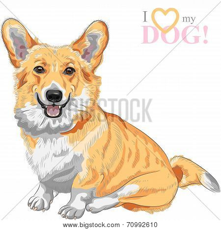 color sketch of the dog Pembroke Welsh corgi breed sitting and smiling poster