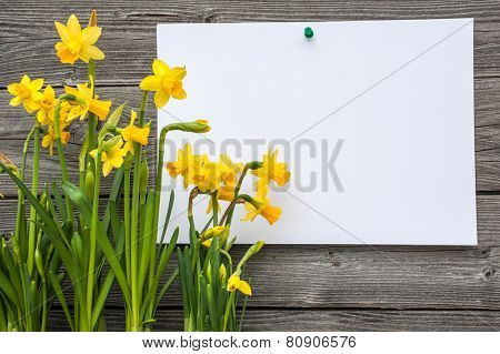 Message and spring daffodils against wooden background