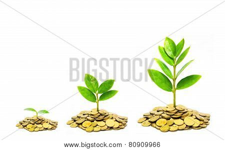 trees growing on coins / business