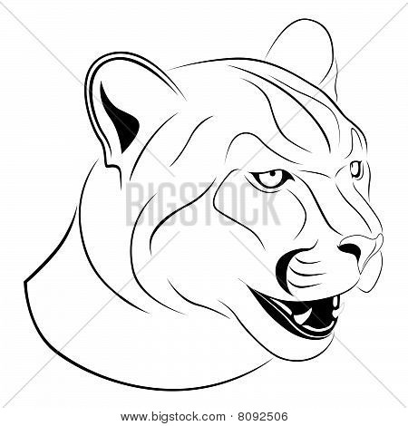 Cougar Images Illustrations Vectors