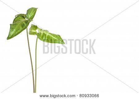 Green Houseplant