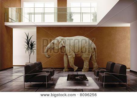Elephant Indoor