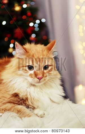 Lovable red cat on lights background poster
