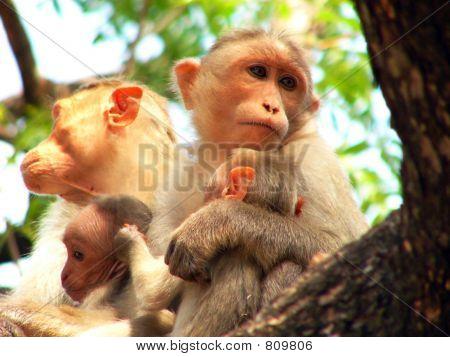 monkey holding the babies