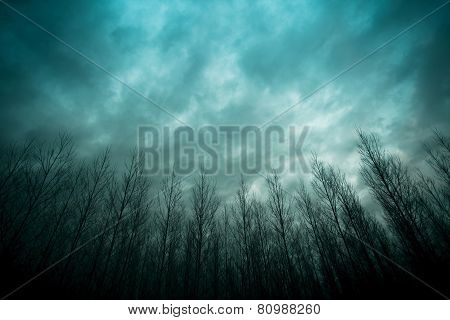 Forest Under A Cloudy Blue Sky.