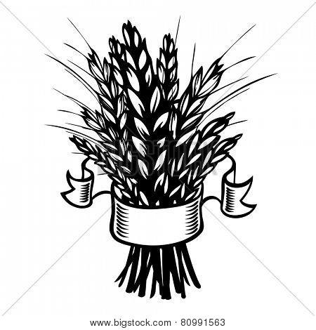 sheaf of wheat or rye on white. Eps8