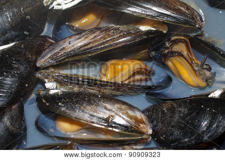 Cozze, Mussels