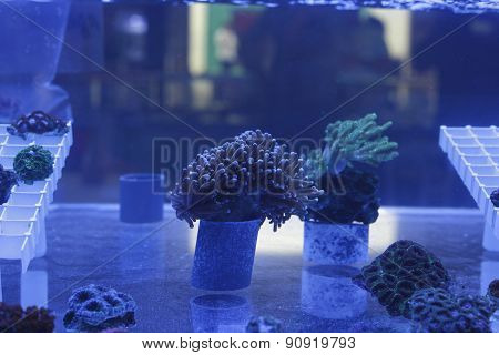Aquarium With Corals