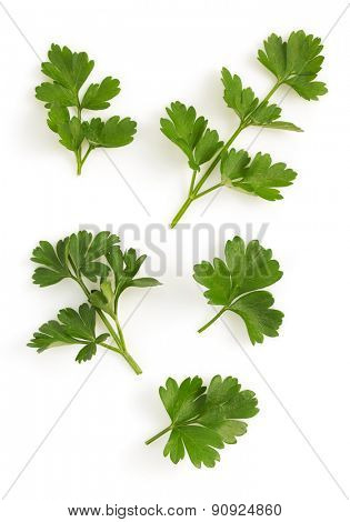 fresh parsley isolated on white background