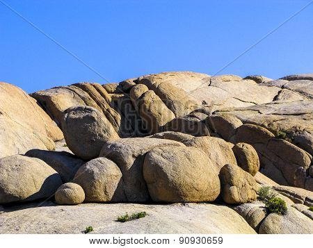 Joshua Tree With Rocks In Joshua Tree National Park