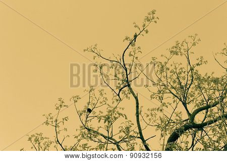 Pretty birds sitting on branches artistic sepia background