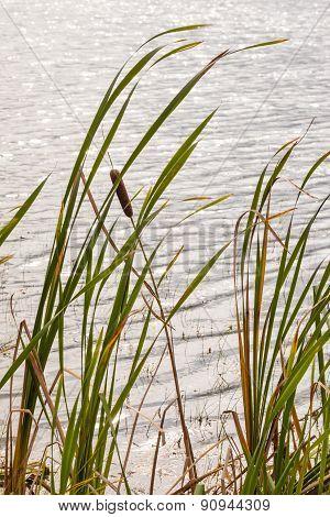 Pond Side Vertical