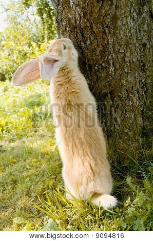 A cute red rabbit standing on hind legs near a tree poster
