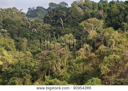 Beautiful landscape of a ceibo tree forest in Manabi, Ecuador
